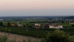filari di vigne