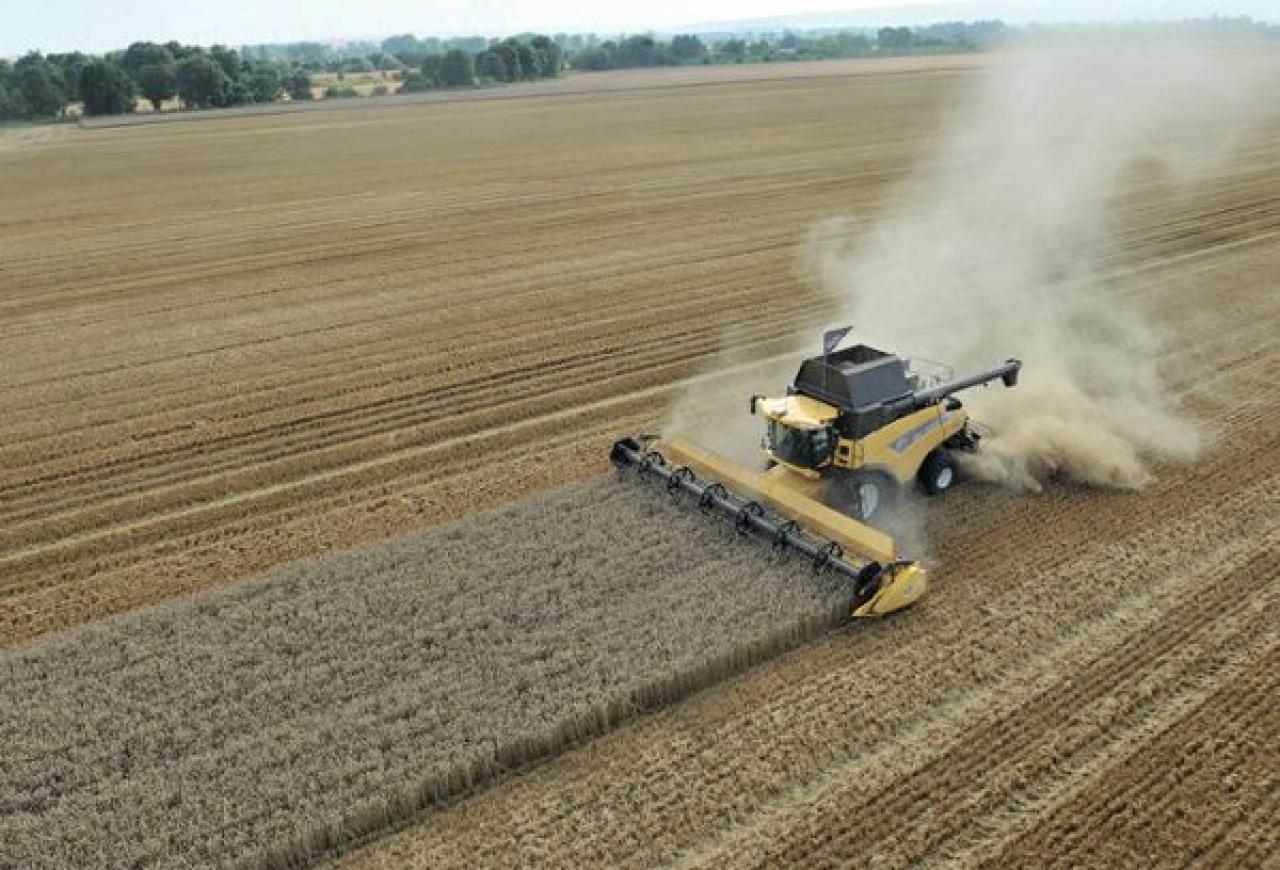 Prezzo cereali e mais in forte aumento a causa del caldo e della ...