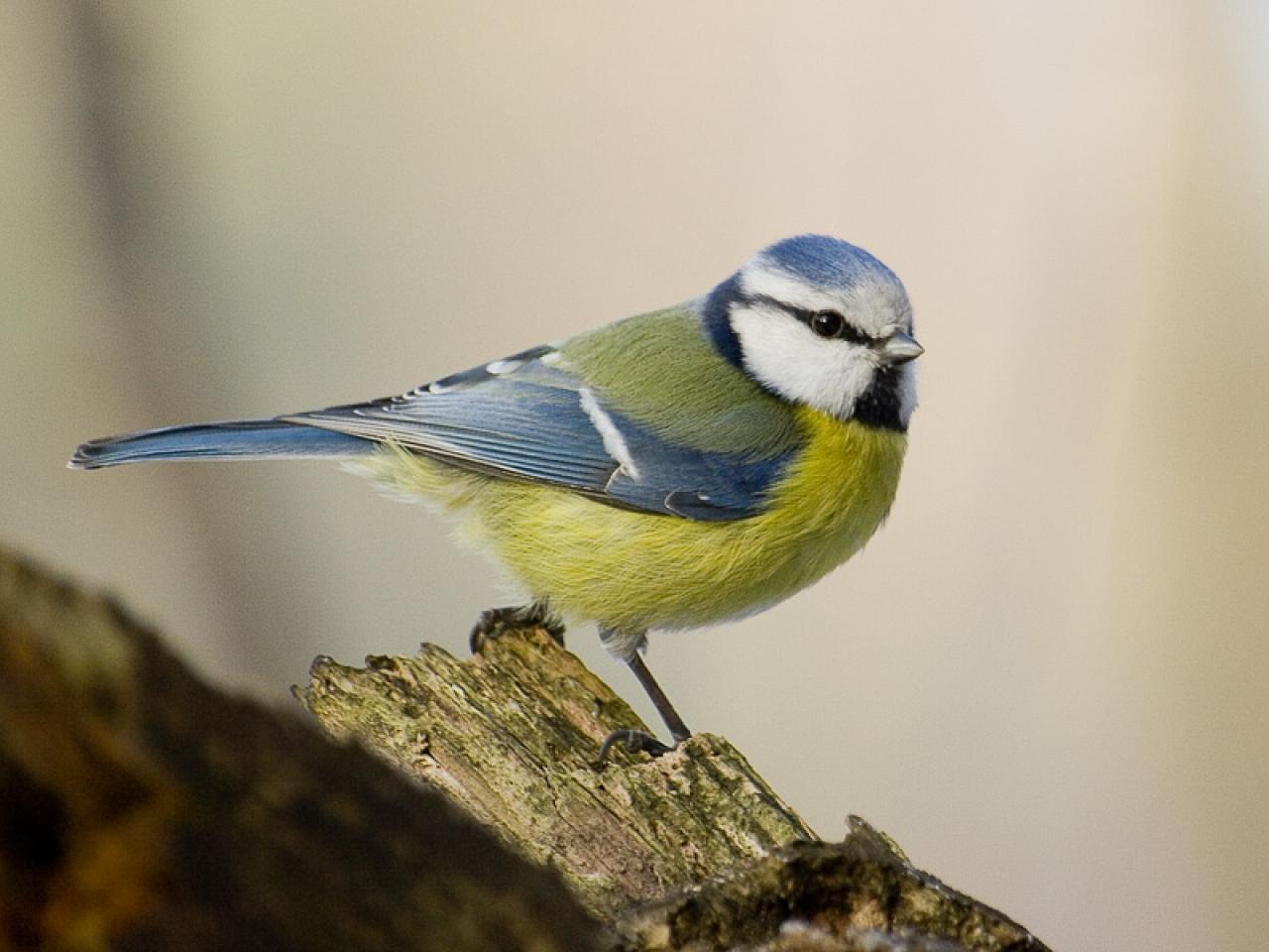 11mila uccelli morti in Germania, si teme malattia sconosciuta