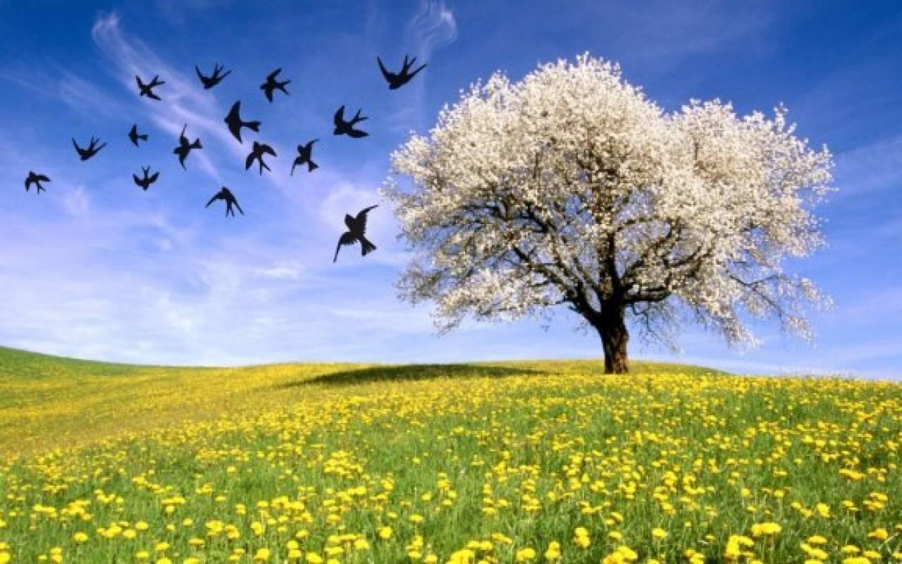Equinozio di Primavera: sancirà l'avvio della Primavera astronomica