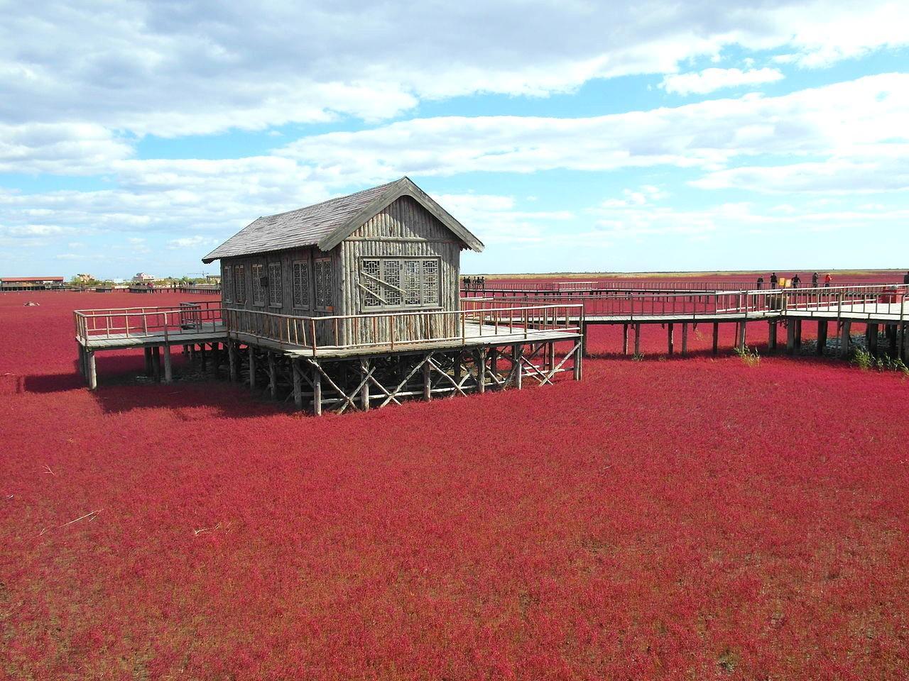 La spettacolare 'Spiaggia Rossa' in Cina
