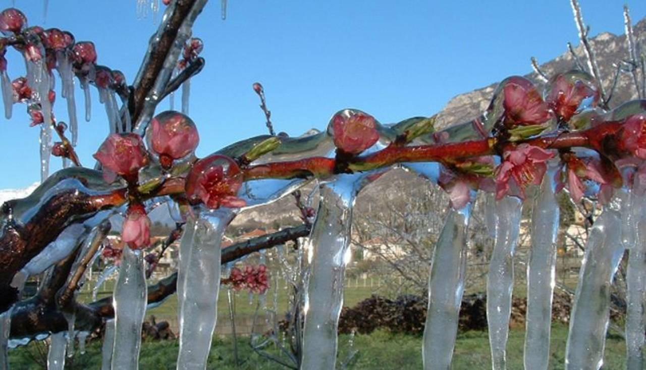 Mele gelate in Alto Adige: fonte immagine, L'ADIGE.IT