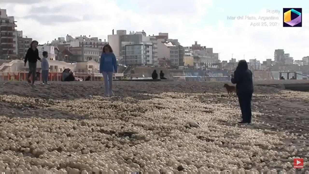 Milioni di piccole sfere affollano questa spiaggia in Argentina