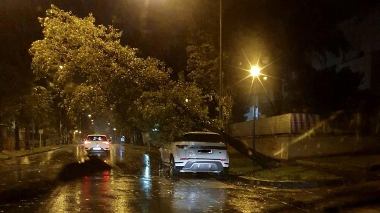 Molti alberi caduti per il forte vento, qui Aversa (CE), fonte casertanews