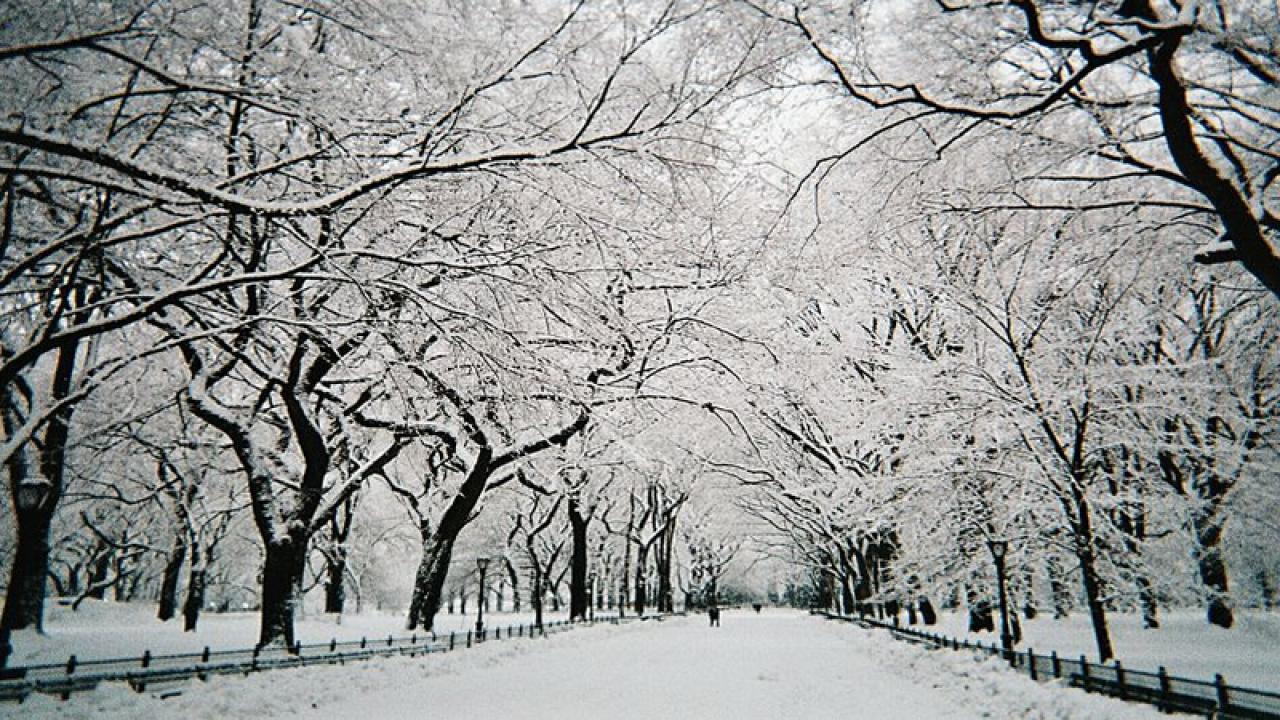neve a New York (immagine di repertorio)