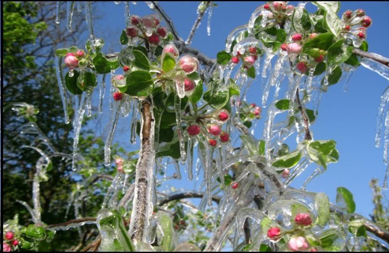 SANTI DI GHIACCIO, quando l'Inverno irrompe nel cuore della Primavera