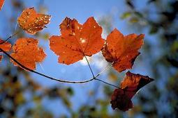 L'autunno è in ritardo. Arriverà nella seconda decade di Ottobre?