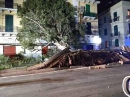 Alberi abbattuti a Messina dal forte vento. Foto via fb di Andrea di Vita