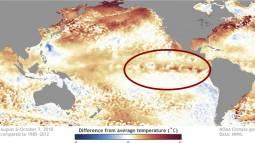EL NINO - quotazioni in aumento per il prossimo inverno. Facciamo il punto