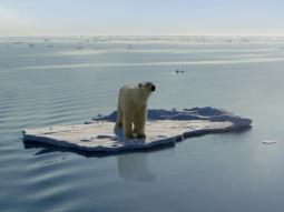 Arriva el nino ci risiamo gli orsi polari tornano alla deriva