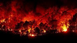Incendi DEVASTANTI in California: numerosi morti