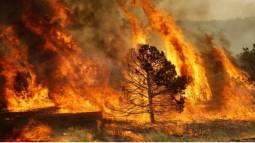 EMERGENZA INCENDI: l Italia brucia ancora. Le zone critiche