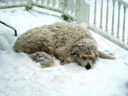 Perché si dice 'fa un freddo cane' ?