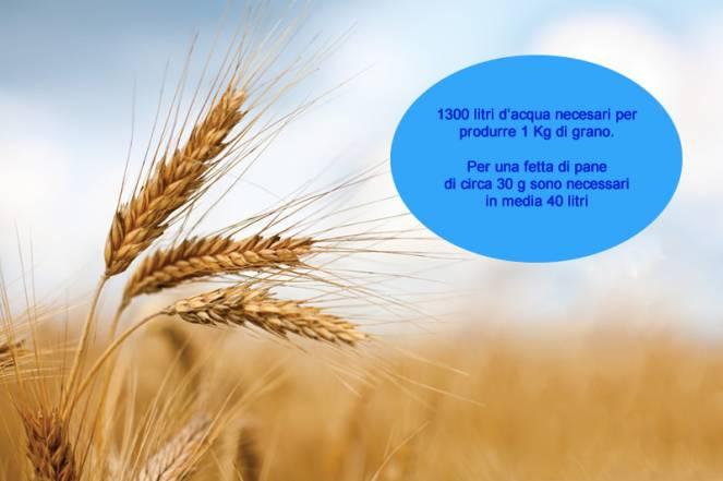 1300 litri di acqua solo per produrre 1kg di grano