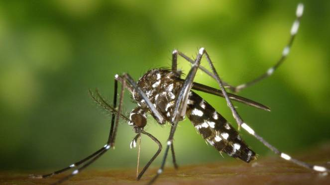 20 Agosto: Word Mosquito Day