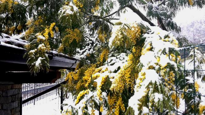 8 Marzo: torna la neve in collina su parte del Nord
