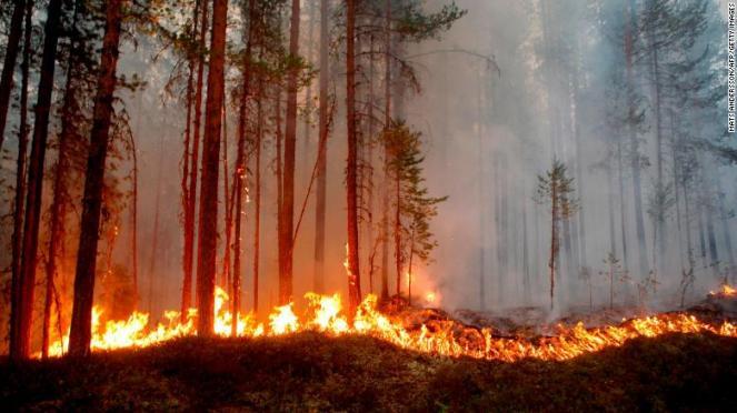 Almeno 80 incendi stanno distruggendo le foreste della Svezia