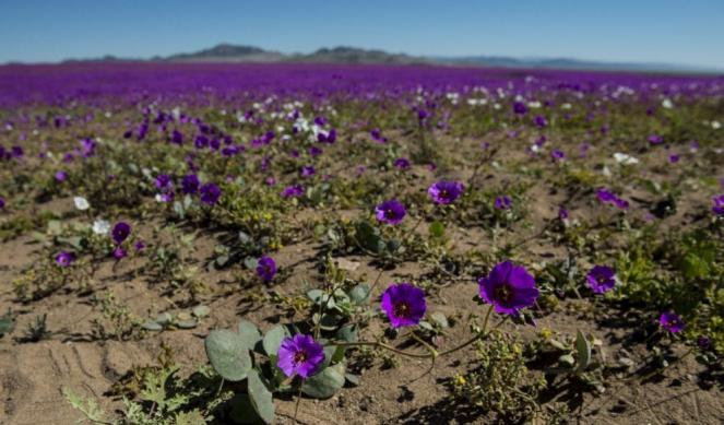 Altre immagine dei fiori - afp
