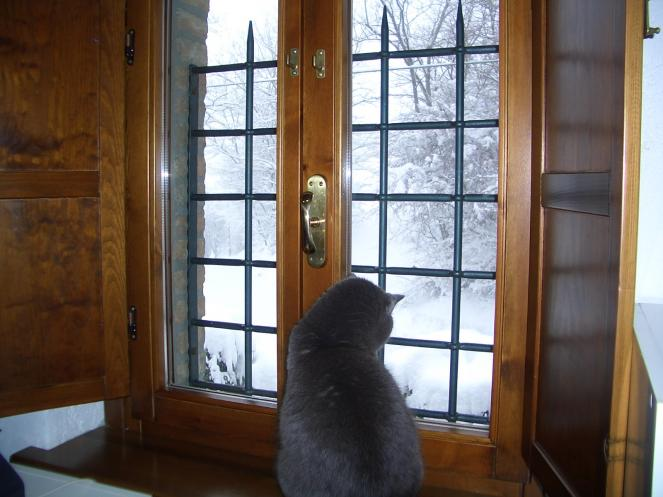 Ammirare la neve