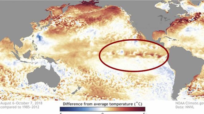 anomalie temperatura pacifico
