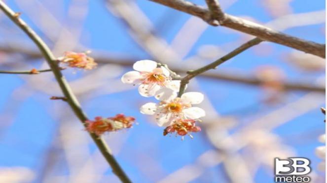 C'è aria di primavera sull'Italia, temperature anomale e clima molto mite
