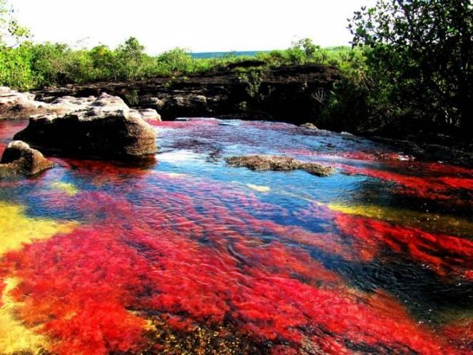 Cambiamenti climatici, a rischio il fiume arcobaleno in Colombia