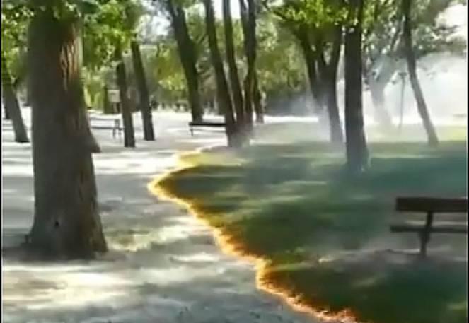 Combustione controllata del polline