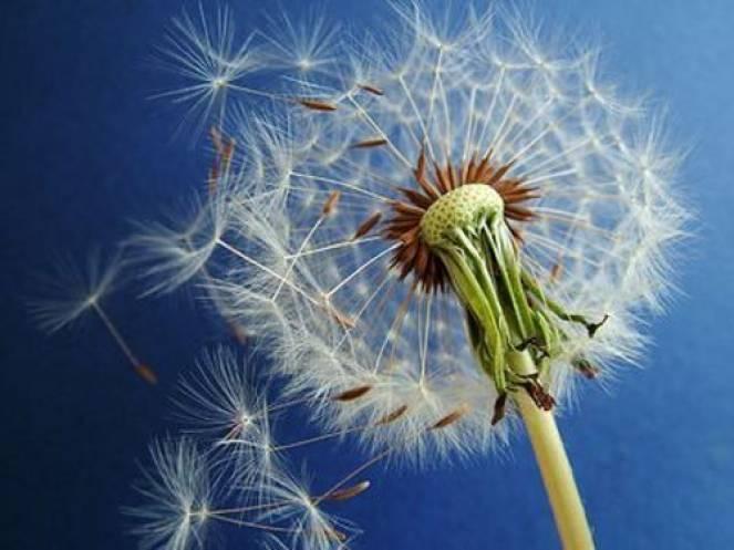 Pollini e allergie aumentano con l'arrivo della Primavera