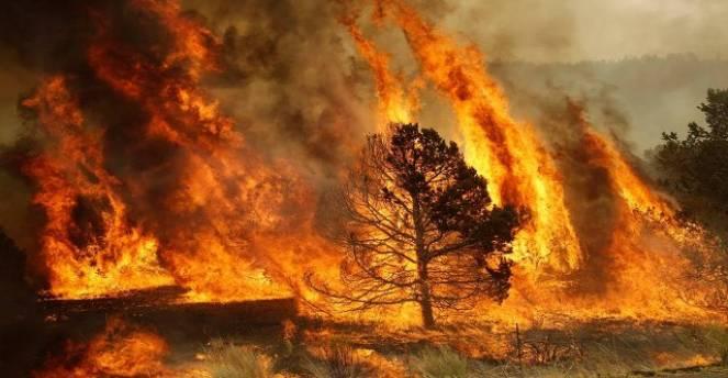 Emergenza incendi, bruciano anche Abruzzo e Molise