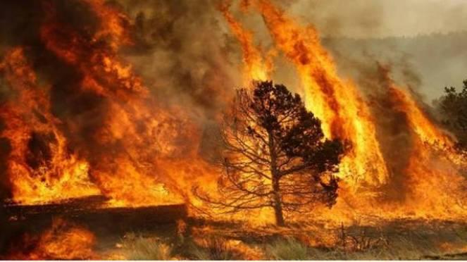 Emergenza incendi in Spagna, brucia l'Andalusia