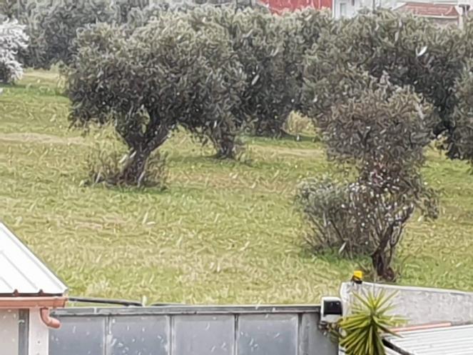Fiocchi a Faggiano (TA). Foto di Nives Cozzucoli