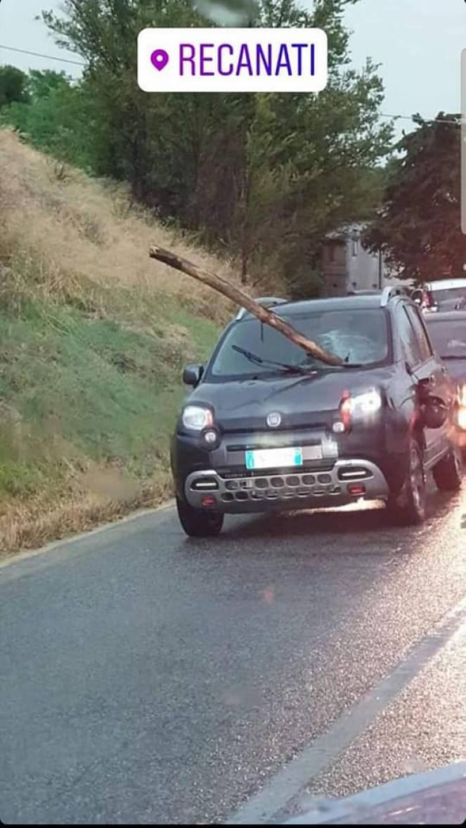 Foto dal Web, auto colpita da un tronco d'albero a Recanati