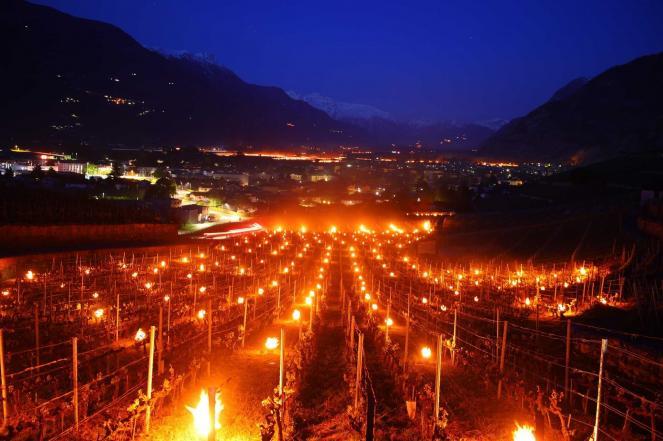 Fuochi nelle vigne per riparare le piante dal gelo. Fonte FB Severe Weather Europe