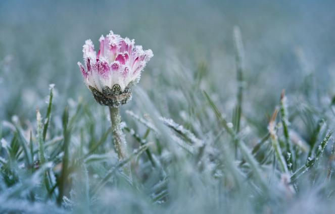Gelo tardivo su mezza Europa. Fonte Primrose