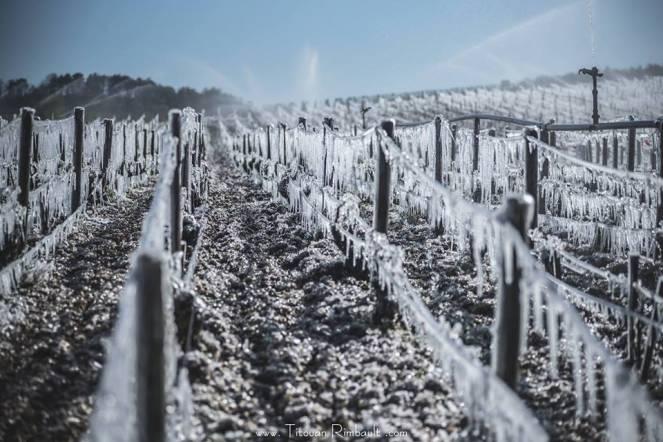 Gelo tardivo, un pericolo per l'agricoltura