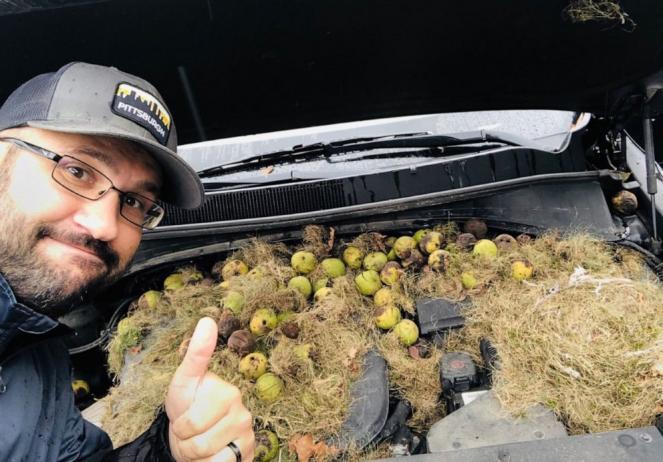 Gigantesco nido di scoiattoli all'interno di un auto a Pittsburg