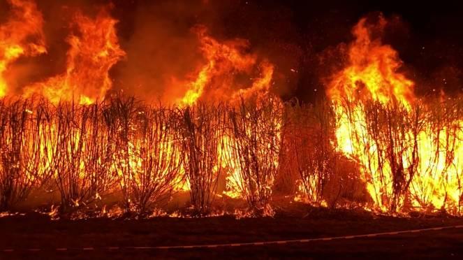 Incendi devastanti in Australia, è emergenza
