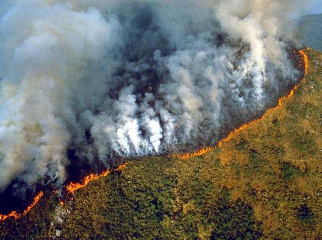 Risultati immagini per incendi in amazzonia