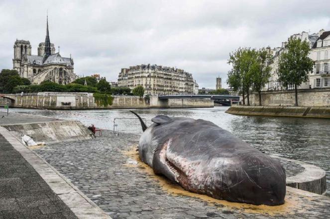 Parigi, una balena lungo la Senna: ma è un'installazione di un'associazione ambientalista