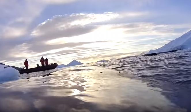 Le immagini riprese da una balena in Antartide