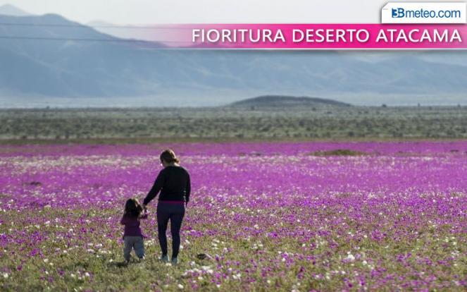 Malva in fiore nel deserto- afp