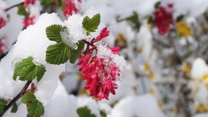 neve in primavera
