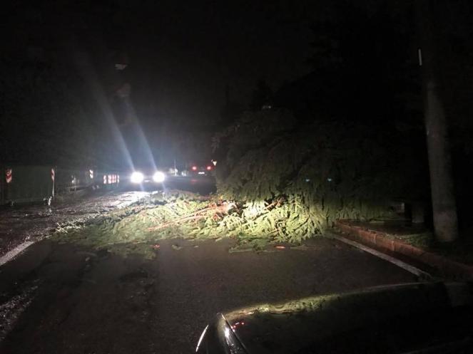 Tromba d'aria a Bibbiena: alberi caduti e tegole pericolanti