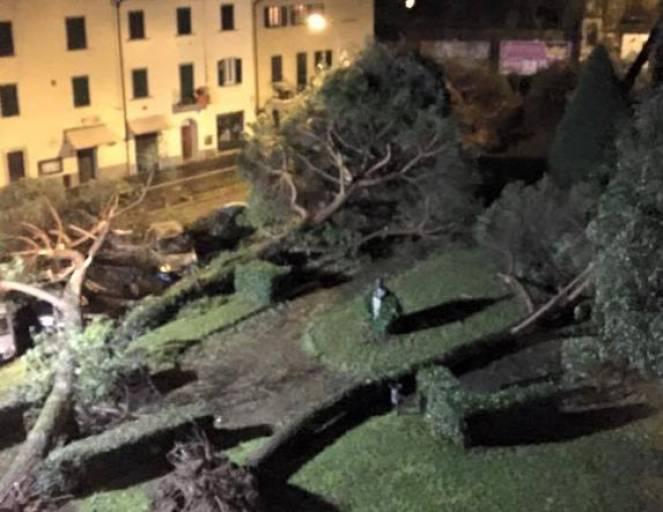 Pistoia, alberi abbattuti dal vento