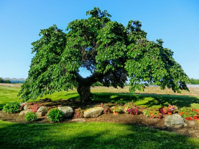 Curiosit quanti alberi ci sono sulla terra 3b meteo for Quanti deputati ci sono