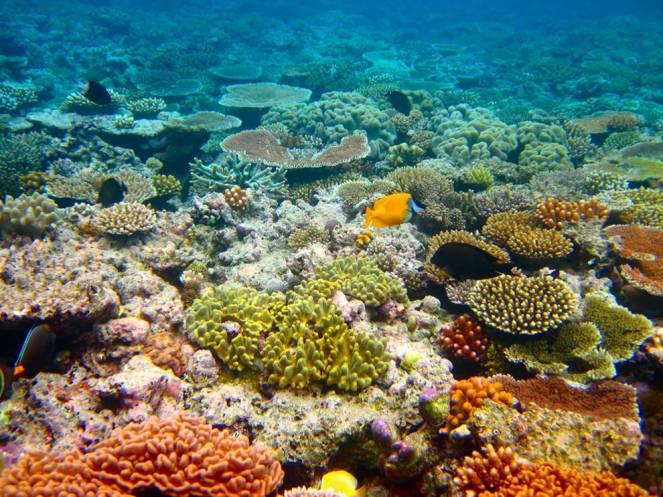 Riscaldamento globale - Se la temperatura media salirà di 2° perderemo il 99% delle nostre barriere coralline