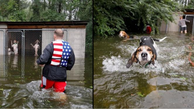 Sei cani salvati da morte certa da un volontario nella Carolina del Nord