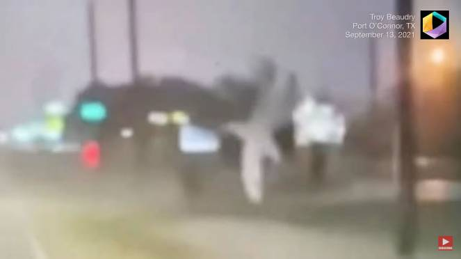 Uno squalo volante durante l'uragano Nicholas