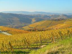 Wonderful autumn colors from Langhe