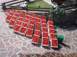 Pomodori In Spianata